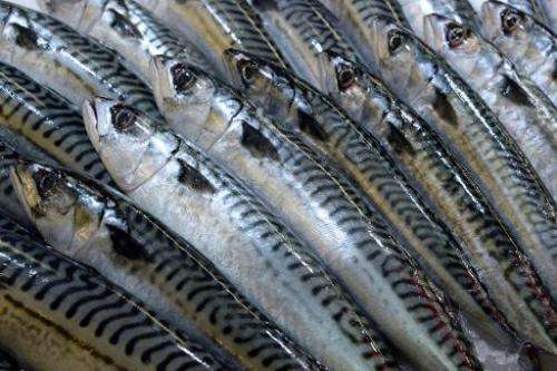 A picture taken on February 13, 2014 in Bordeaux, western France, shows mackerels at a fish shop