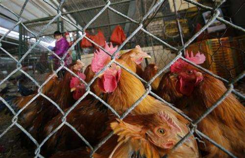 Bird flu spikes in China ahead of Lunar New Year