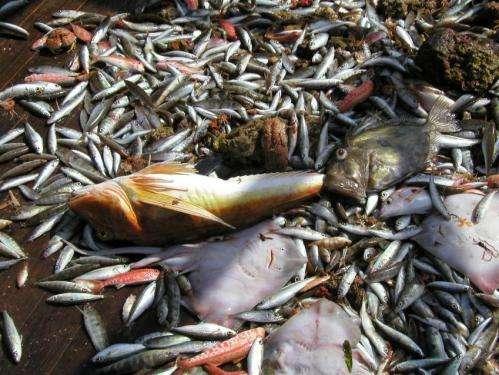 Mediterranean fish stocks show steady decline