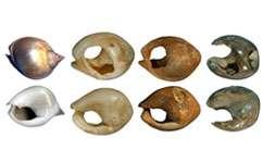 Prehistoric beads were made from British shells