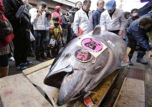 Surrogate sushi: Japan biotech for bluefin tuna