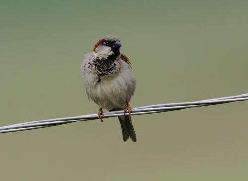 Study reveals startling decline in European birds