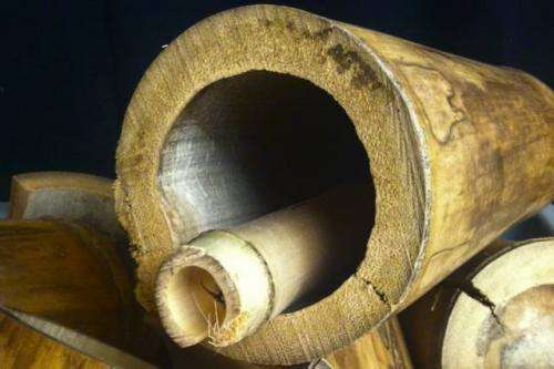 Researchers study bamboo for engineered building material