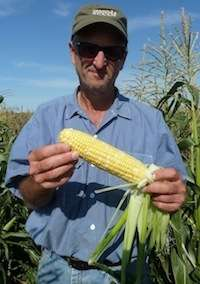 Collaboration yields new organic sweet corn variety