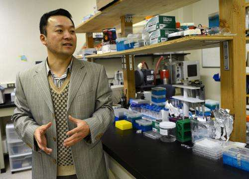 Researcher uses Jell-O-like substance to attract and kill cancer cells