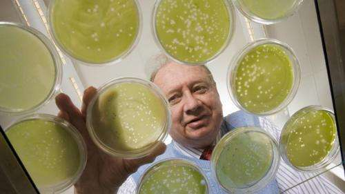 Researchers identify algae-virus DNA in humans