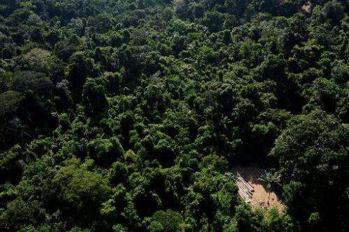 An aerial view of the Amazonic forest reserve of Trairao, in northern Brazil, December 4, 2011