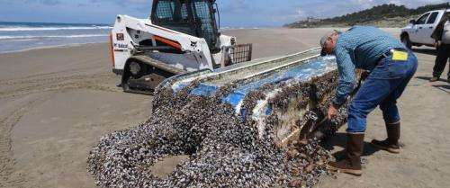 Scientists prepare for another wave of tsunami debris, possible invasives