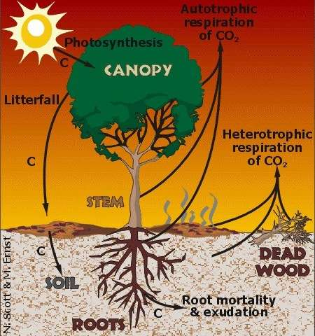 Study suggests non-uniform climate warming affects terrestrial carbon cycle, ecosystems and future predictions