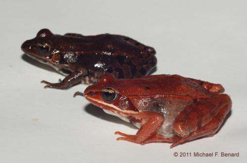 Climate change appears a mixed bag for a common frog