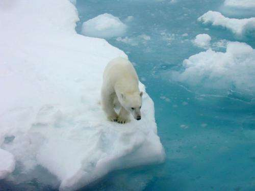 Arctic is warming at twice the rate of anywhere else on Earth