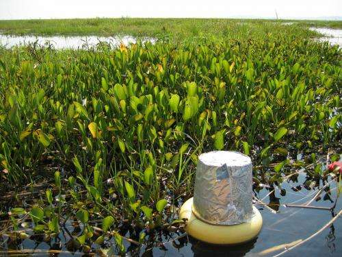 Global warming may increase methane emissions from freshwater ecosystems