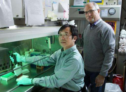 Salk scientists unveil powerful method to speed cancer drug discovery
