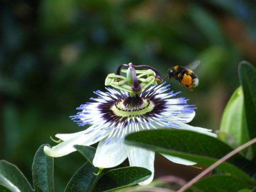 Extinction of 23 pollinators in Britain since 1850