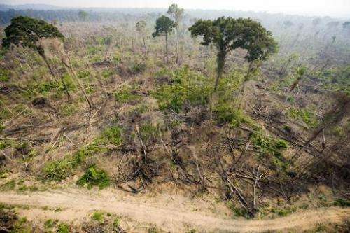 An aerial view taken on November 29, 2009 shows a burnt out sector of the Jamanxim National Forest at an illegal settlement in t