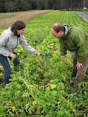 La investigación revela el verdadero valor de los cultivos de cobertura para los agricultores, el medio ambiente