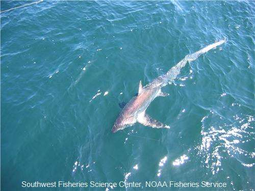 Climate change projected to drive species northward