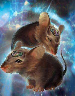 Scientists use lasers to control mouse brain switchboard