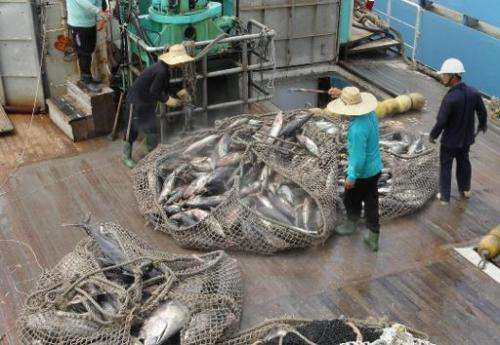 This photo taken on May 2, 2014 shows a net filled with skipjack tuna coming out of the hold of a purse seine fishing vessel anc