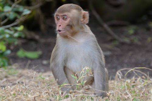 When it comes to recognising family, you can't make a monkey out of a macaque