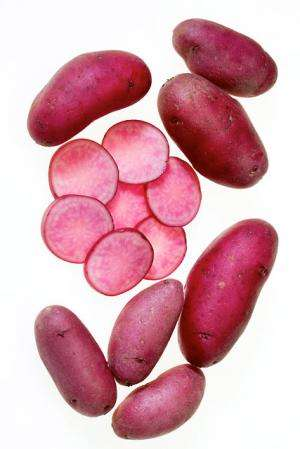 Scientists have bred and released colorful new varieties of potato