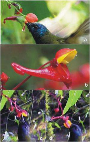 A bird-pollinated flower with a rather ingenious twist