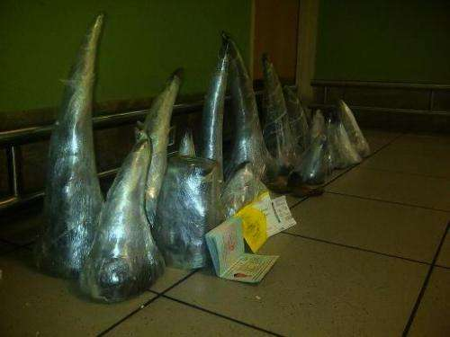 A cache of 41kg of smuggled rhino horns is seen at O.R. Tambo Airport in Johannesburg after it was confiscated from two Vietname
