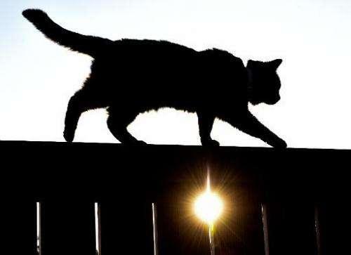 A cat walks on a fence as sun sets in Sieversdorf, eastern Germany, on June 6, 2014