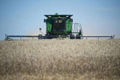 A combine harvester is used in a wheat field near the city of Mercedes, 270 km northwest of Montevideo, Uruguay, on December 4,