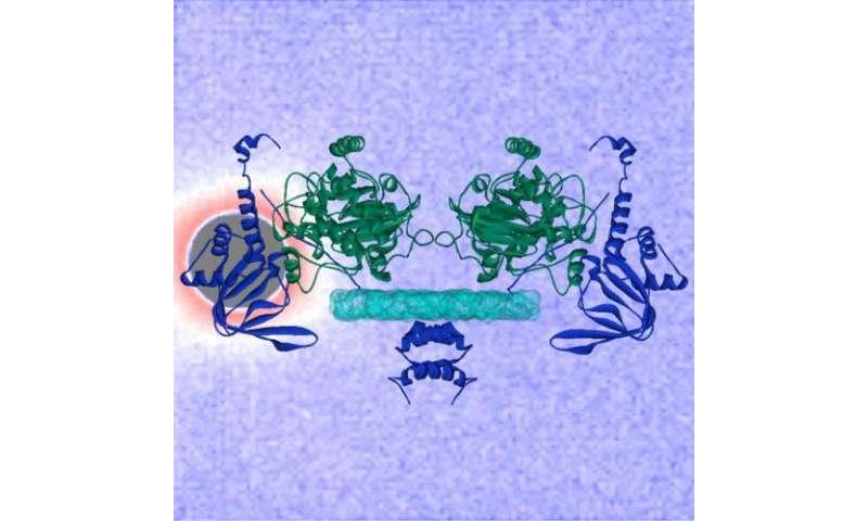 Advanced x-ray, neutron beam imaging reveal workings of powerful biochemical switch PKA