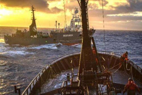 A handout image from Sea Shepherd Australia Ltd showing the Japanese whaling ship Yushin Maru crossing the bow of the Bob Barker