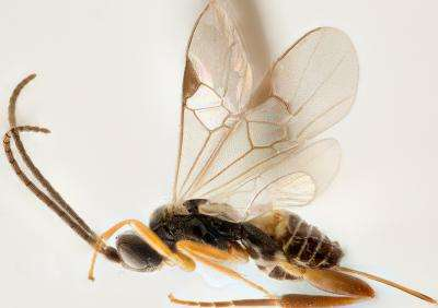 Almost 200 new species of parasitoid wasps named after local parataxonomists in Costa Rica