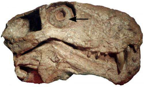 Ancient mammal relatives were active at night 100 million years before origin of mammals