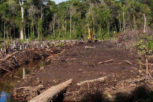 An excavator clears a peatland forest area for a palm oil plantation in Trumon subdistrict, Aceh province, on Indonesia's Sumatr