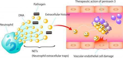 A novel therapy for sepsis?