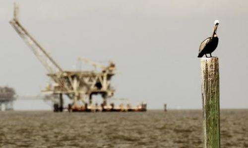 A pelican rests on a piling with an oil rig in the background April 18, 2011 in Dauphin Island, Alabama