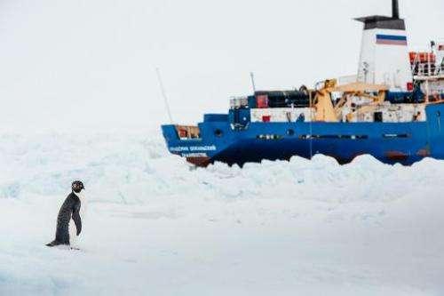 A penguin stands near the MV Akademik Shokalskiy (R), shown stuck in the ice off East Antarctica, December 31, 2013