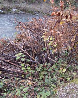Are invasive plants a problem in Europe? Controversial views among invasion biologists