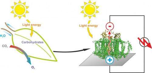 A semi-artificial leaf faster than 'natural' photosynthesis