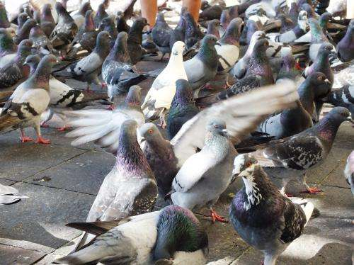 Assessing risk of lung disease through contact with birds
