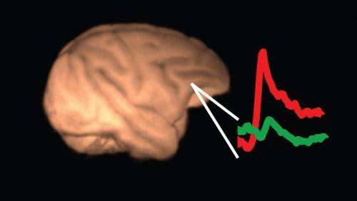 At least two regions of the brain decide what we perceive