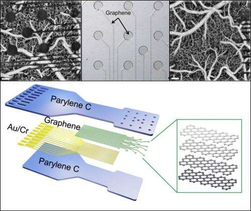 Atom-width graphene sensors could provide unprecedented insights into brain structure and function