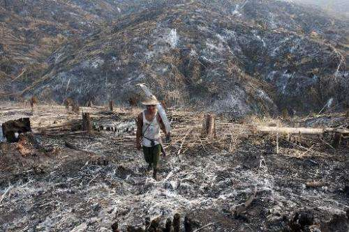 A worker carries a saw where teak trees once grew in the Bago Region of Myanmar after the land was scorched ahead of replanting,