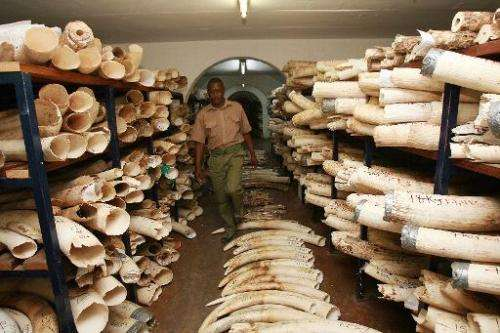 A Zimbabwe National Parks worker walks in the room where elephant tusks and rhino horns are kept on October 12, 2010 in Harare