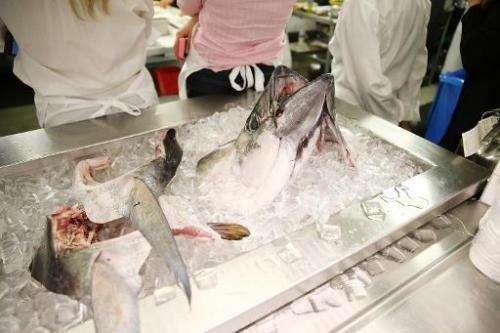 Bigeye tuna is prized for making sashimi in Asia, America and Europe