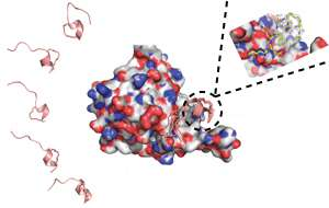 Biophysics: Stapling together cancer therapy