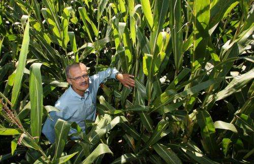 Boosting global corn yields depends on improving nutrient balance