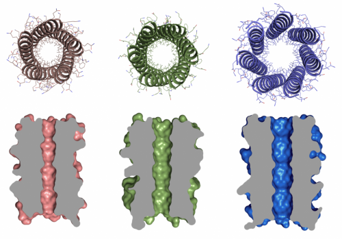 Bristol team creates designer 'barrel' proteins