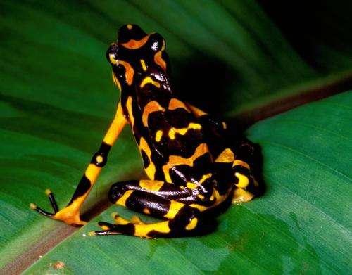 Call for alternative identification methods for endangered species
