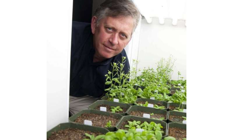 Discovery could yield more efficient plants for biofuels